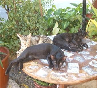 Katze springen auf Tisch abgewöhnen